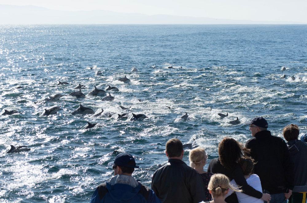 Custom Charters Monterey Bay Blue Ocean Whale Watching