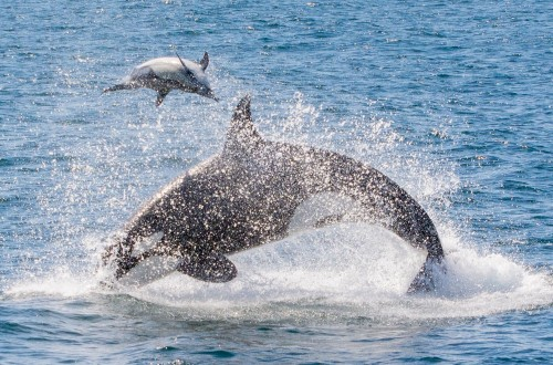 Special Events Monterey Bay Whale Watching