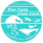 Blue Ocean Whale Watching